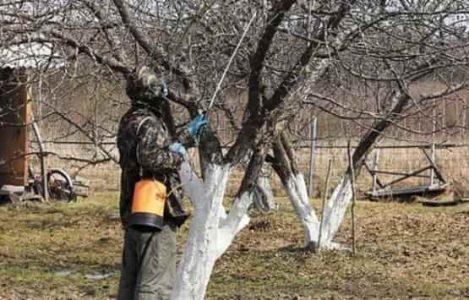 Обработка деревьев осенью на зиму железным купоросом