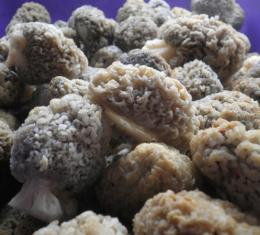 Отварные грибы сморчки